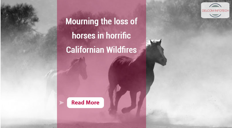 horrific Californian Wildfires